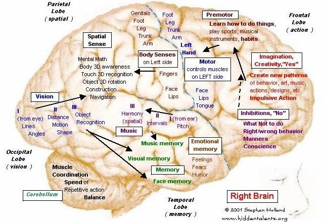 brain 1a