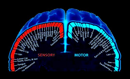 brain edited inverted
