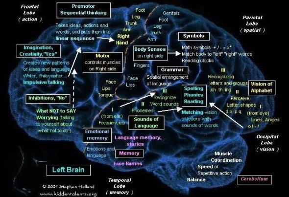 brain 1nverted